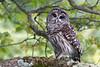 Audubon Birds_355_20180915