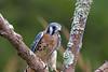 Audubon Birds_299_20180915