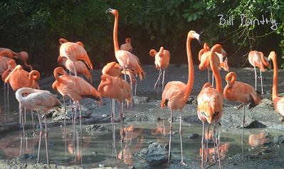 Flamingos at the Aquarium