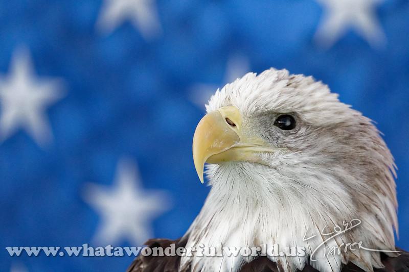 Audubon Birds_238_20180915