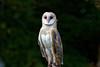Audubon Birds_356_20180915