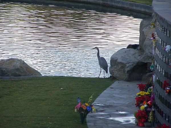Egret at Rose Hills - 2