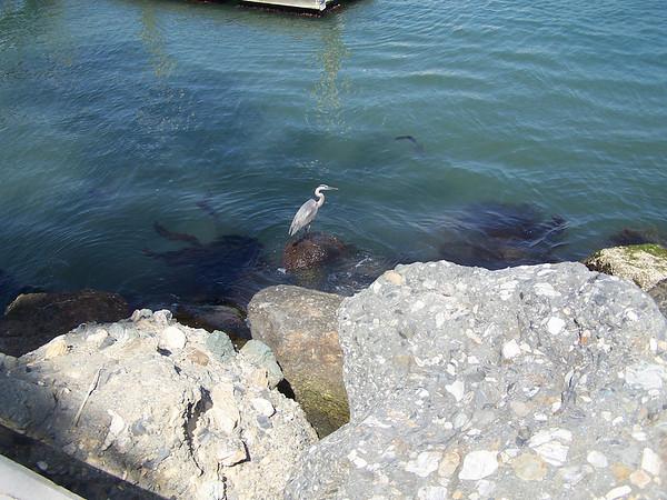 Crane at Balboa - 1
