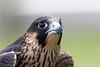 Audubon Birds_312_20180915