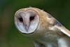 Audubon Birds_308_20180915