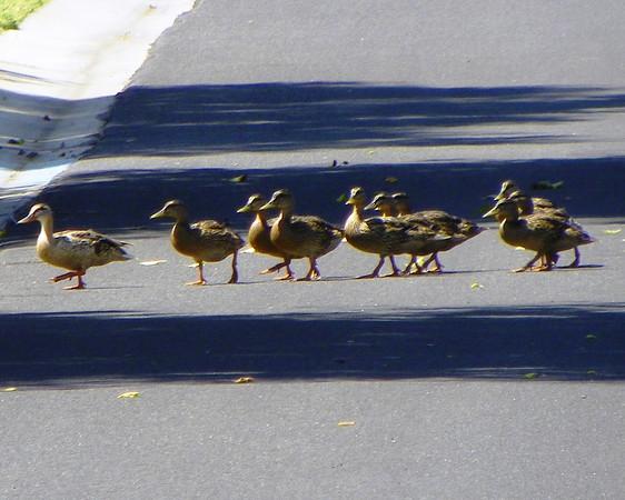 Duck! Pedestrians!