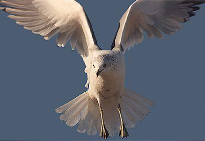 Birds 1990s