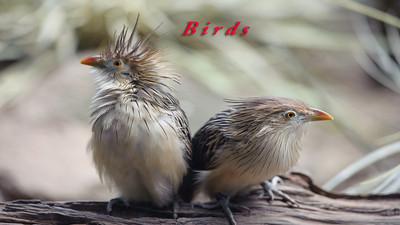 Birds (Aves)