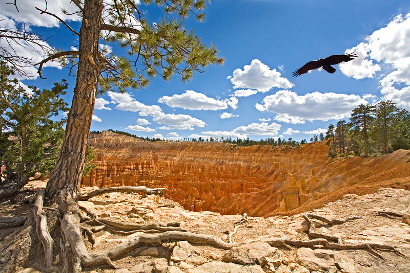 Ravin flies over Bryce canyon