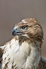 Red tail side face