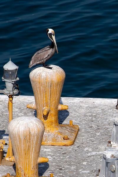 Cartegena, Columbia;Harbor