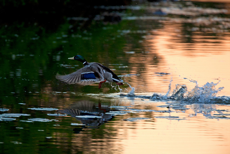 Greece Canal Ponds Park.   Sunset 6/6/11