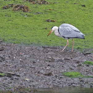 Birds & Creatures UK & Ireland