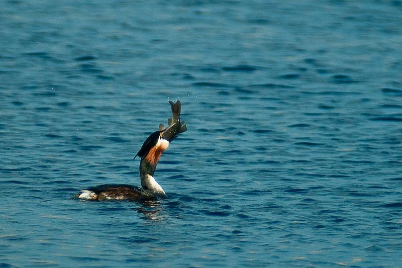 Mahtava saalis! - Good catch!
