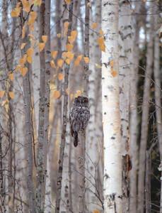 Forest Dweller