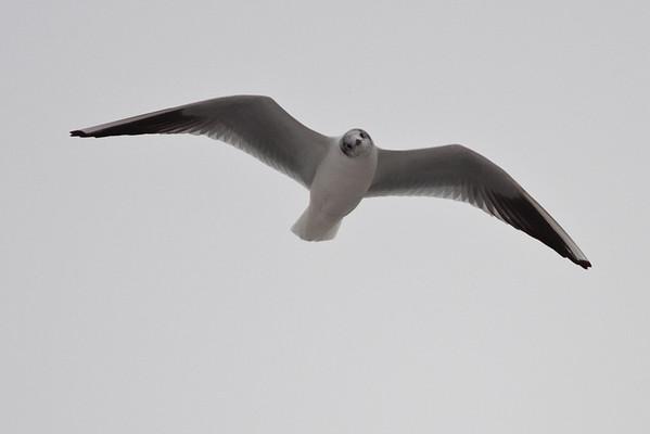 Birds / Ptáci