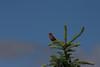 Birds007