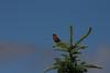 Birds009