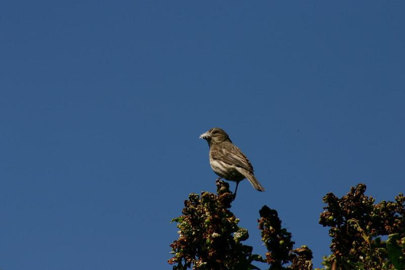 Birds038