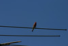 Birds010