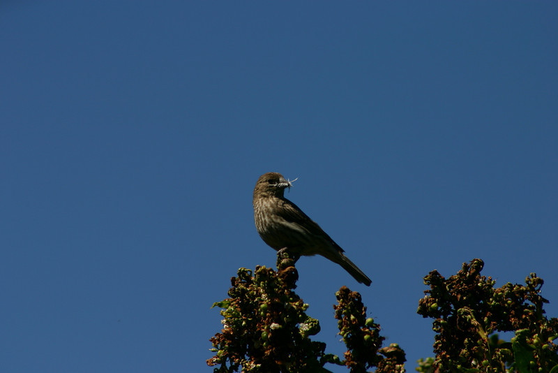 Birds043