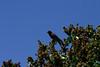 Birds041