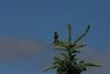 Birds005