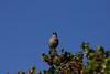 Birds026
