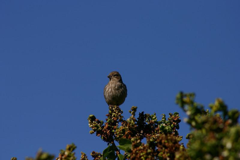 Birds028