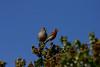 Birds034