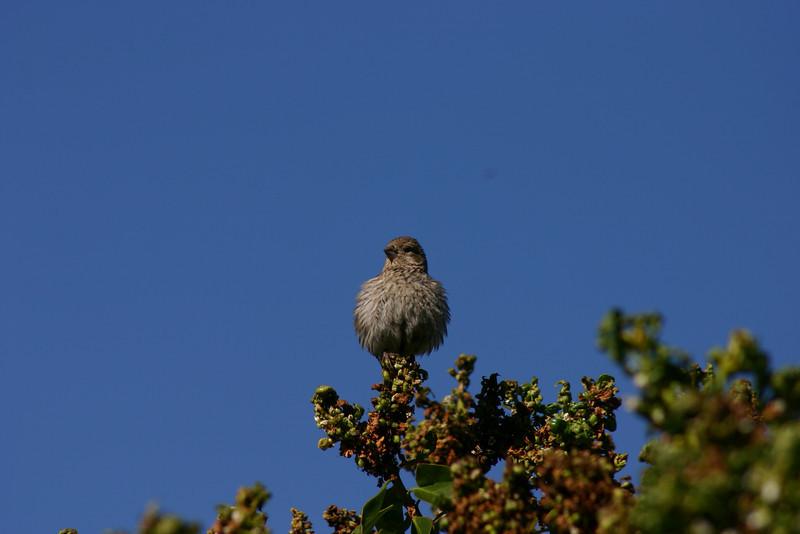 Birds023