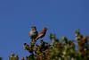 Birds035