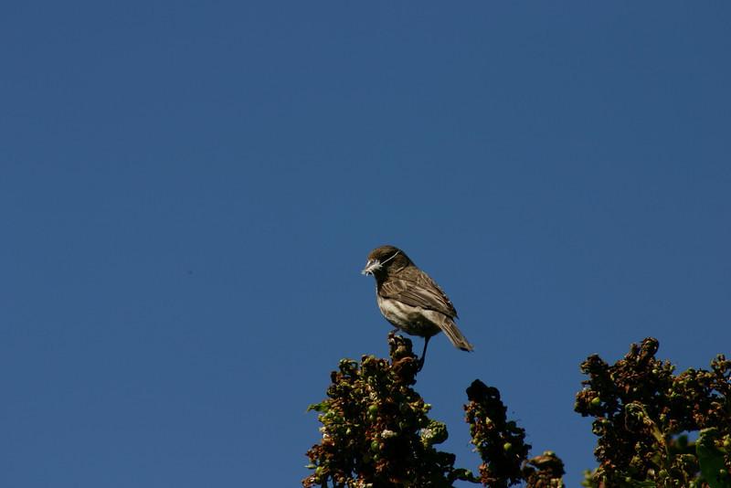 Birds037