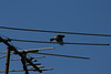 Birds004