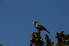 Birds042