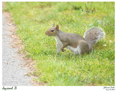 Squirrel 3  Golden Gate Park, San Francisco, 10 August 2011