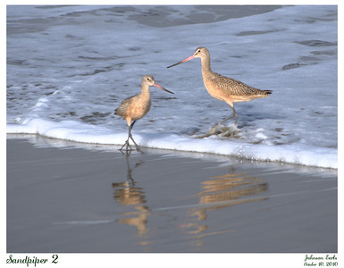 Two sandpipers.  Taken at Pacifica State Beach, 10 October 2010.