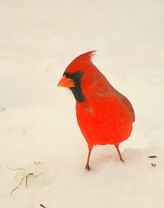 Birds and Sigma AF 500mm f7.2 APO