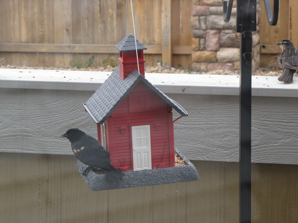 Red Winged Blackbird and a Sparrow