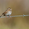 Savannah Sparrow, Joe Overstreet Landing