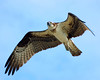 Birds of Prey : 1 gallery with 54 photos