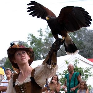 Leanne launching a Harris Hawk