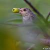 Flowerpecker close-up<br /> Photo @ Lotus Pond, Hyderabad