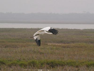 Second bird up.  Copyright 2010 Neil Stahl