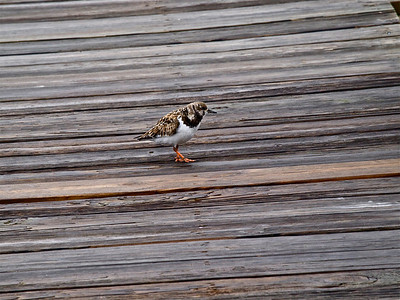 Bird on Jetty Copyright 2010 Neil Stahl