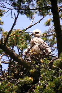 May 25, 2012 - I SPOTTED A SECOND CHICK  SITTING BY THE BRAVE ONE...YAY!!