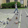 June 24, 2013.  Mallards and pigeons outside City Hall, Reykjavik, Iceland. pic by jdm