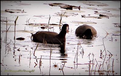 2015-01-09_P1092900_Lake Chautauqua Park,Clearwater,Fl