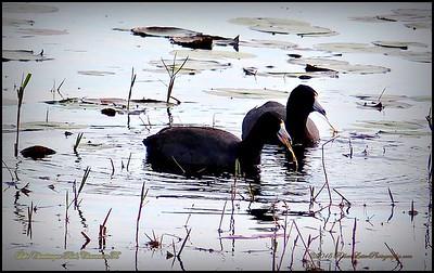 2015-01-09_P1092905_Lake Chautauqua Park,Clearwater,Fl