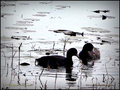 2015-01-09_P1092896_Lake Chautauqua Park,Clearwater,Fl